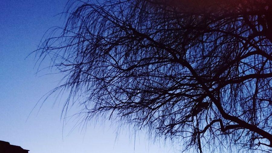 Bare Tree Sky