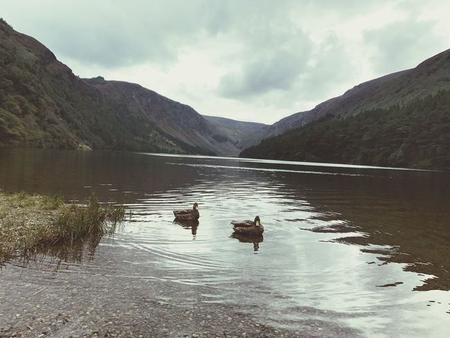 Mountain Lake Nature Water Beauty In Nature Mountain Range Scenics Animal Themes Outdoors No People Day Sky Reflection Tranquil Scene Cloud - Sky Animals In The Wild Tranquility Bird Mammal Duck Ducks Ireland
