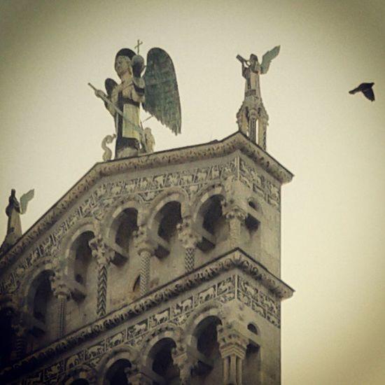sveglia alle 6. 4,5 km a piedi per arrivare al lavoro. allucinazioni mistiche. Tuscany Pastel Power Italy Lucca Italia The Sentinel Toscana Architecture History Church San Michele Bird Photography Bird