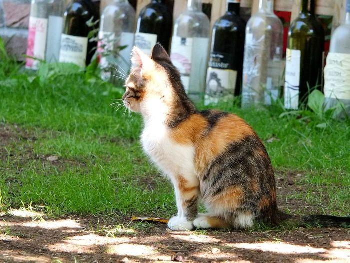 Cat Cute Pets Nature Taking Photos Green Hello World Open Edit Photography EyeEm Best Shots