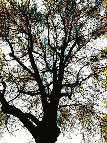 Tree Branch Low Angle View Nature No People Backgrounds Beauty In Nature Day Outdoors Sky Close-up