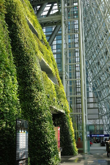Seoul City Hall Architecture Built Structure Plant Ivy Building Green Color Growth Modern Nature City