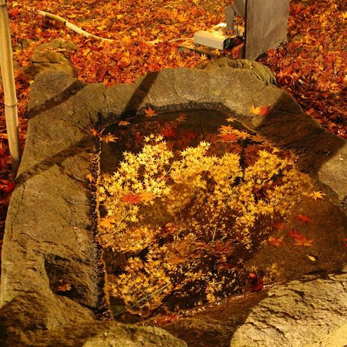 水面に写る紅葉南昌荘