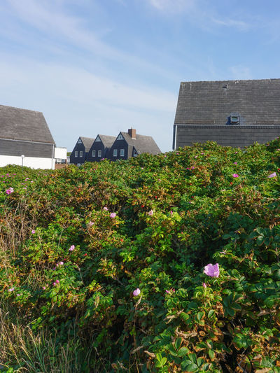 Architecture Beauty In Nature Blooming Building Exterior Built Structure Cloud Cloud - Sky Day Flower Freshness Grass Green Color Growing Growth Lawn Nature No People Northsea Outdoors Plant Sky Sylt Sylt Strand Sylt, Germany Sylt_collection