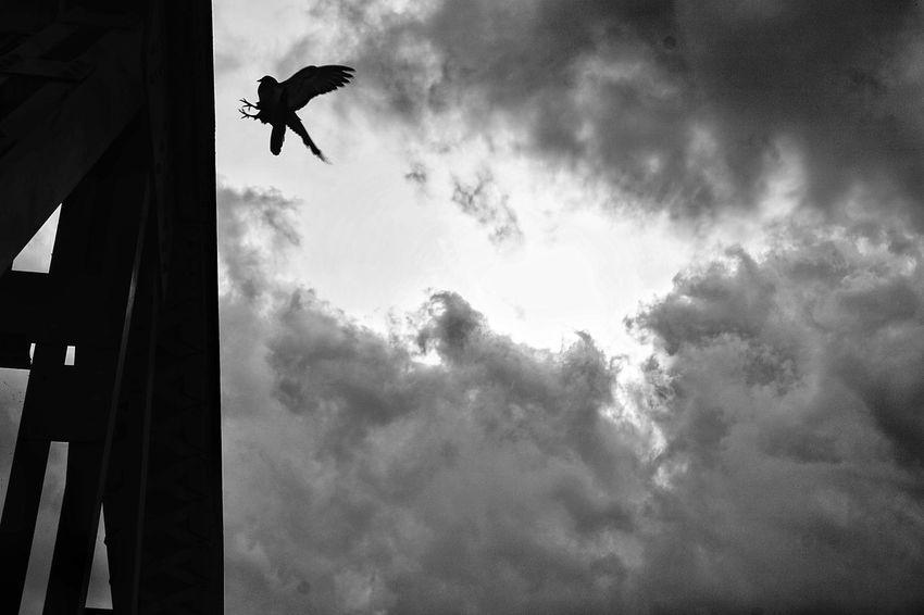 Bird Bridge Blackandwhite Black And White Blackandwhite Photography The Street Photographer - 2018 EyeEm Awards