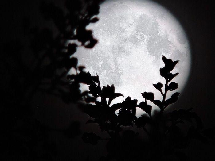 Moon 🌕 Moon