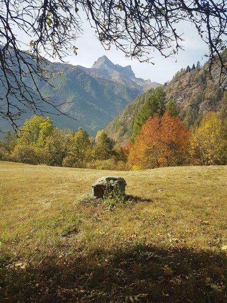 Autumn Autumn Colors Tranquility Silence Mountains Grass Trees And Nature Beauty In Nature Landscape Mountainscape Varaita Valley, Piedmont Valle Varaita