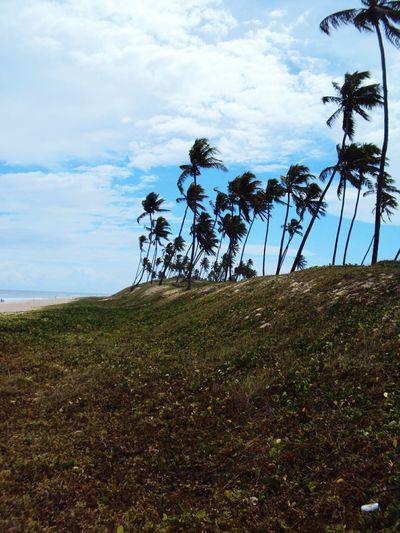Bahia/brazil