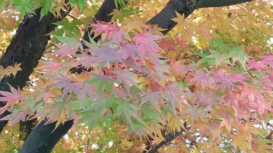 Autumn 💖 Leaf No People Autumn Nature Outdoors Day Beauty In Nature