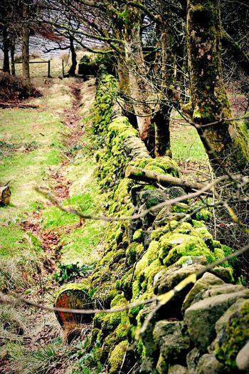 Showcase: January Wall Stone Rock Green Nature Nature_collection Taking Photos Moss Trees Walking Around Pease Boundary DoveStones Saddleworth Water Resivoir Colors
