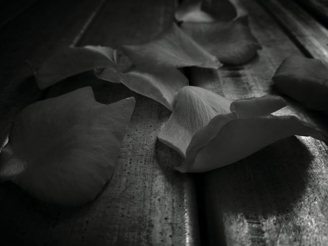 Loved you...! MonochromePhotography Black And White B N W Light And Shadow Quiet Moments EyeEm Nature Lover Rose Petals Monochrome Monochrome Photography EyeEm New Here Welcome To Black Art Is Everywhere