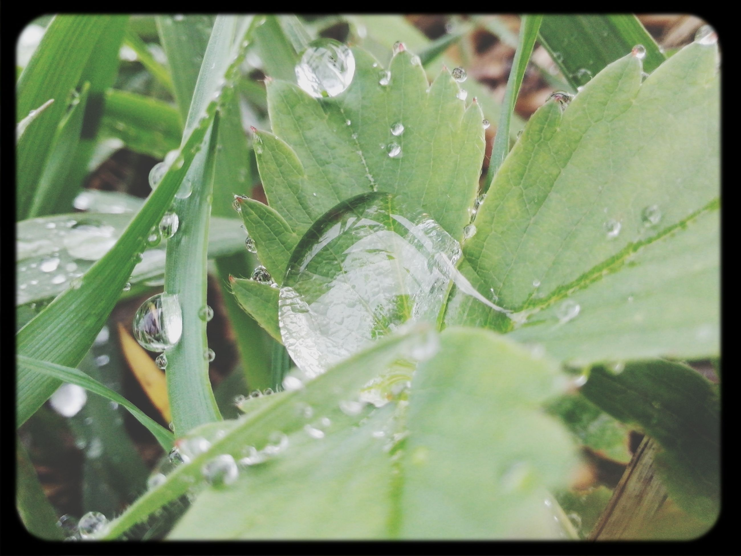 leaf, water, transfer print, drop, wet, close-up, green color, growth, freshness, auto post production filter, plant, nature, fragility, dew, beauty in nature, focus on foreground, selective focus, day, raindrop, high angle view