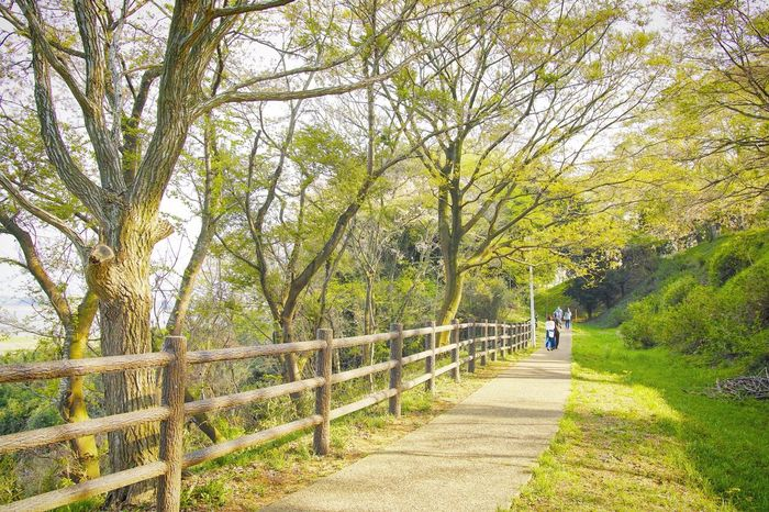 Brightness Tree Walking Footpath Nature Railing One Person Outdoors Beauty In Nature People Day Full Length Branch Rural Scene Real People Women Scenics Road Adult Men Adults Only EyeEm Gallery EyeEmNewHere