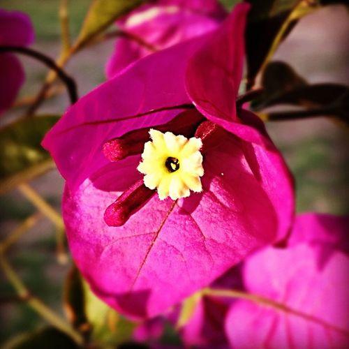 Flor Flower Nature Lalojm1 instagram iphone 2012 mexico