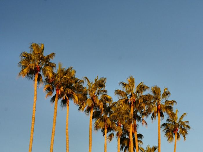 Beauty In Nature Clear Sky Day Growth Low Angle View Nature No People Outdoors Palm Tree Sky Tree