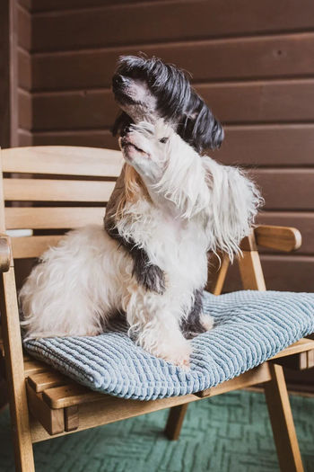 Dog sitting on bench