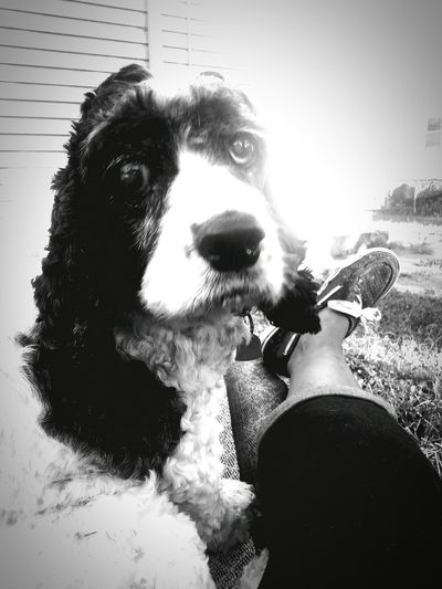 Me and my baby doing what we do. Saturday Relaxing Life In Kansas Love Without Boundaries Cockerspaniel Dogslife Black And White Now And Always. Homeiswheretheheartis My Best Photo 2015