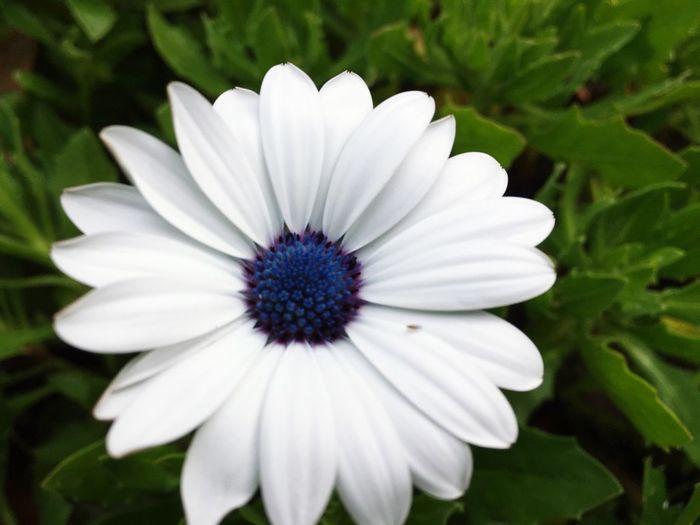White flower White Flower Garden Garden Photography Flower White Landscaping Green Close-up Close Up Closeup Bug Insect Insect On White Flower First Eyeem Photo