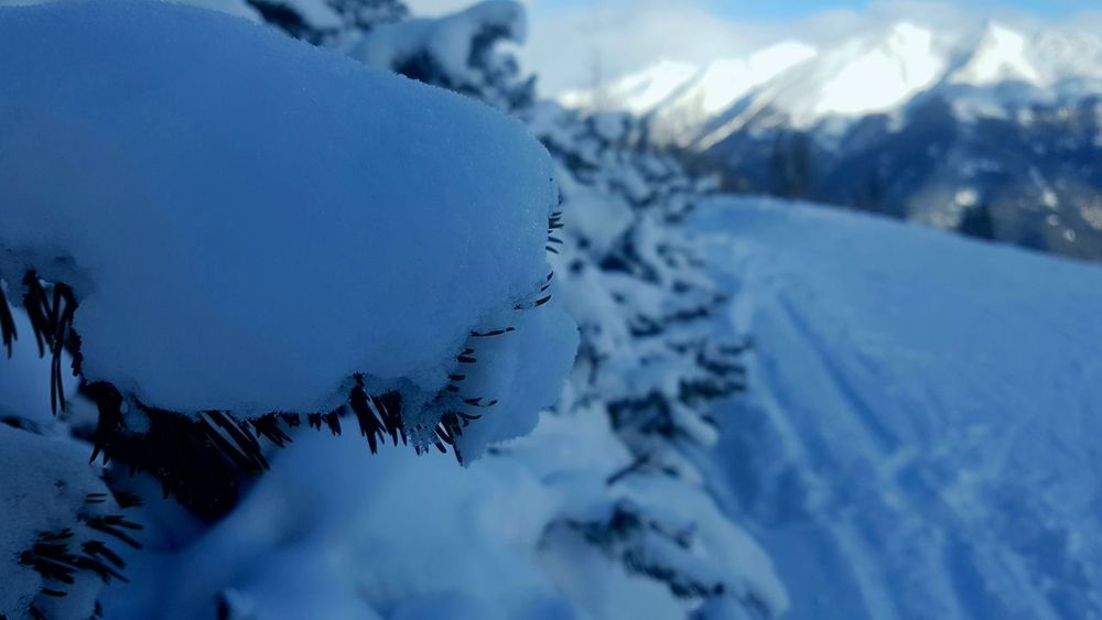 Winter Snow Cold Temperature Beauty In Nature Nature Scenics Winter Sport Frozen Sport Mountain Day Outdoors Landscape Sky Tree Ski Holiday Close-up No People Skiing 🎿 Weather Bright Wintertime Snow ❄ Frozen Tree