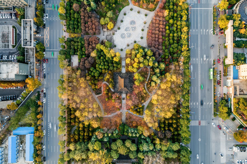 Aerial view of trees amidst buildings in city during autumn