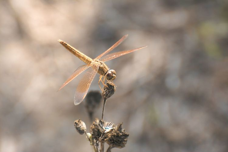 Dargonfly Dragonfly Close-up Nature No People Outdoors Insect Insect Photography