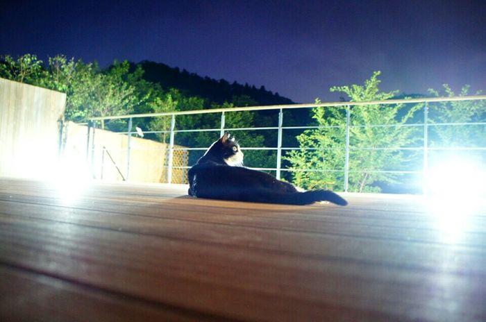 Tan Tanstagram Terrace Veranda Verandaview Summer Night Cat Tuxedo Cat