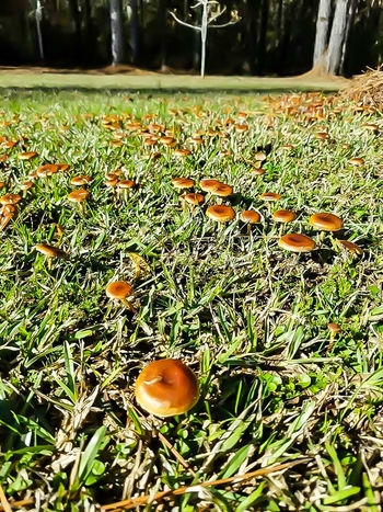 Growth Nature No People Grass Field Outdoors Green Color Beauty In Nature Day Food Tree Close-up Freshness Dirt Fungi Fungus 🍄 Fungus Brown Mushrooms Growing Food Wild Mushroom Toadstool Rural Scene All Natural Freshness Mushroom