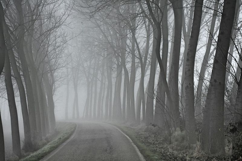 Tree Forest Nature Fog Bare Tree WoodLand Landscape Tree Trunk Beauty In Nature Scenics Deciduous Tree Tranquility Branch Road Outdoors No People Tree Area Day Desaturated Streetphotography Blackandwhite