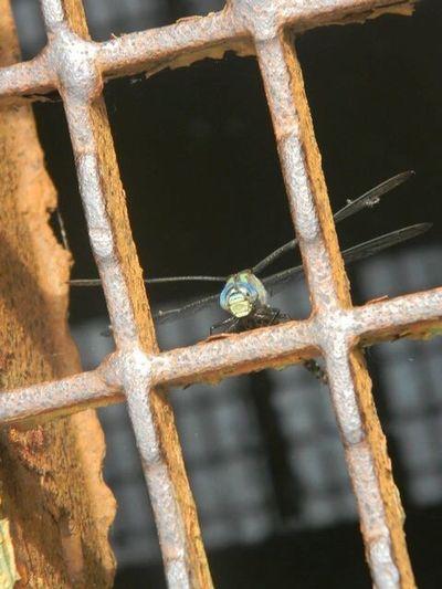 Oh dragonfly <3 EyeEmNewHere Insect Animal Wildlife Nature Close-up Bridge Splitshot Outdoors