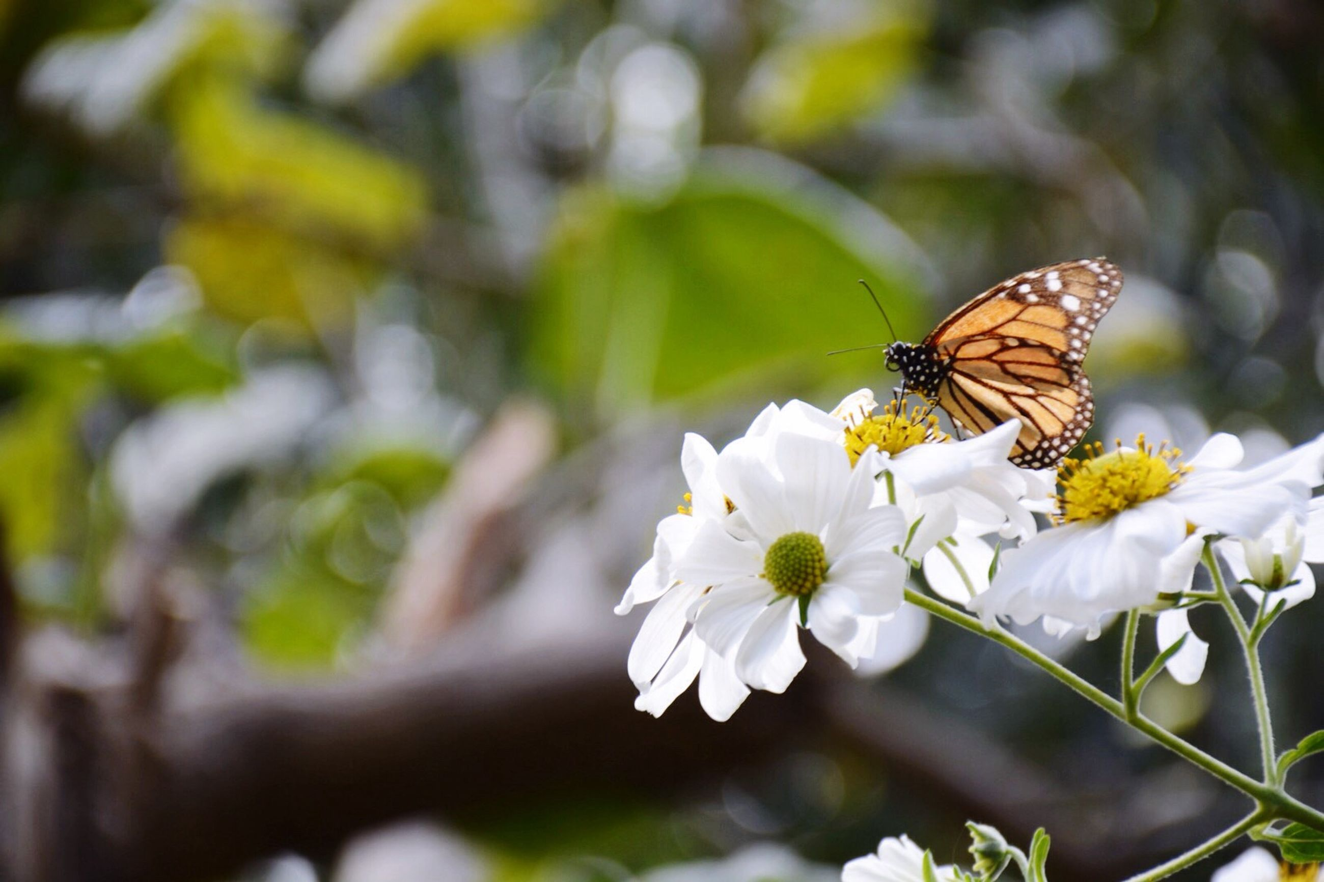 insect, flower, animal themes, animals in the wild, wildlife, one animal, pollination, freshness, fragility, petal, focus on foreground, bee, beauty in nature, growth, nature, close-up, symbiotic relationship, butterfly, white color, butterfly - insect