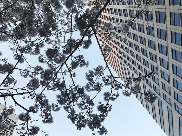 Low angle view of tree and building against sky