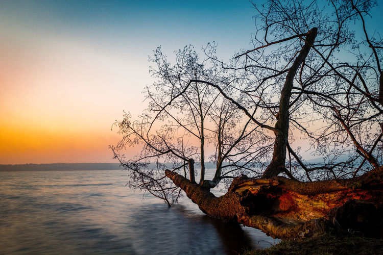 Bare tree by sea against sky during sunset