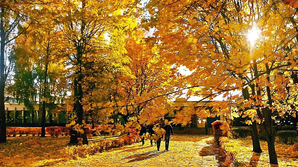 Autumn Autumn Colors Autumn Leaves Autumn Leafs Autumnbeauty Orange Color Autumn Trees Autumn🍁🍁🍁 Leaf Leave Leaves Gold Gold Autumn Golden Season Season  Nature Yellow Autumnal Chrome Autumn Tints