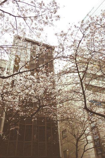 OneCam Flower IPhoneography Blossom EyeEm