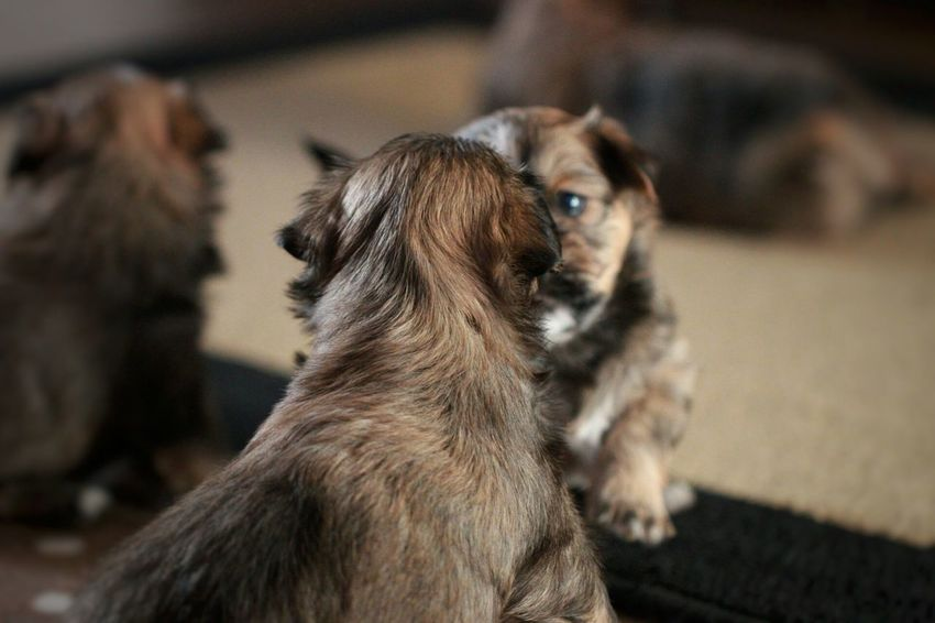 Just found these little guys in an old album. Not so small anymore Dog Pets Animal Close-up Composition EyeEm Best Shots EyeEm Best Shots - Nature Beauty In Nature Abstract Photography Creative Photography The Week On Eyem