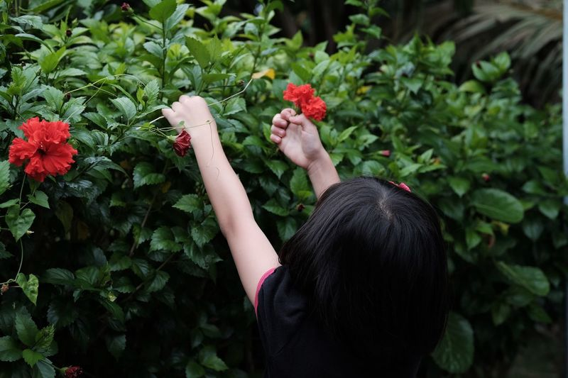 Rear View Of Girl Picking Flowers From Plant