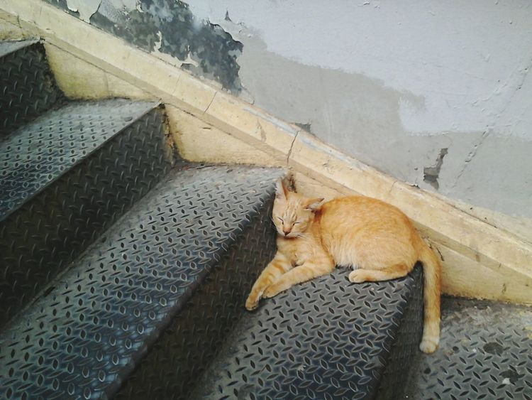 One Animal Rest Life Thailand Rusty Cat Sleepy Sleeping Kitten 🐱 Cat♡ Steps Staircase Bangkok Thailand. Relaxing Sleepy cat at staircase Street Photography