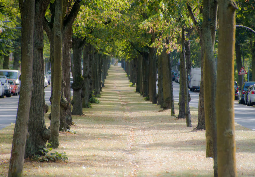Allee Beauty In Nature Branch Bäume Day Diminishing Perspective Green Color Growth In A Row Long Mittelstreifen Nature Outdoors Repetition Road Solitude The Way Forward Tranquil Scene Tranquility Tree Tree Lined Tree Trunk Treelined Trees