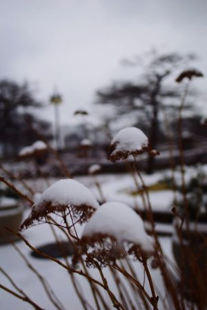 Cold Temperature Snow Winter Nature Close-up No People Focus On Foreground Outdoors Day Frozen Beauty In Nature Chicago Neighborhood Map The Street Photographer - 2017 EyeEm Awards City Life