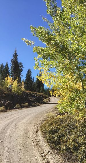 Country Roads💙 Road Aspens Aspen Trees Country Road Northern California Lassen County