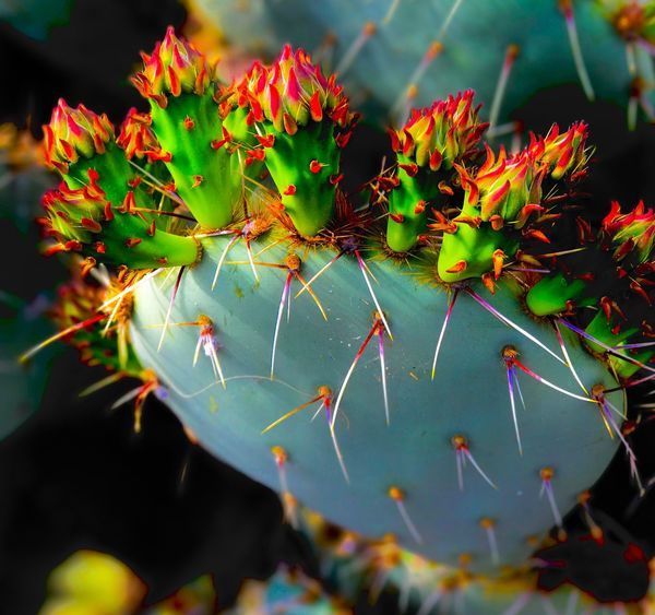 Nature Growth Plant Beauty In Nature Outdoors No People Flower Leaf Freshness Green Color Day Close-up Fragility Water Cactus EyeEm Gallery EyeEmNewHere Check This Out Prickly Pear Cactus Ceedubslens EyeEm Selects