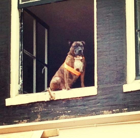 Celebrating KingDay Amsterdam Delirio 88 Dogs Dog Love HH88wlf