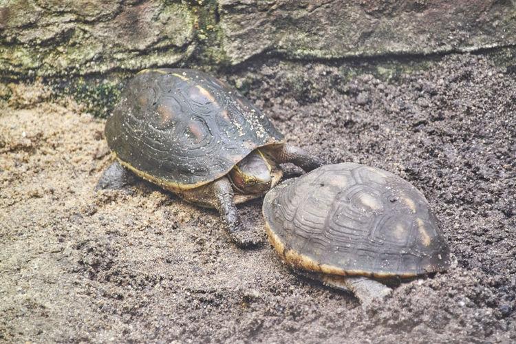 Turtles on rock