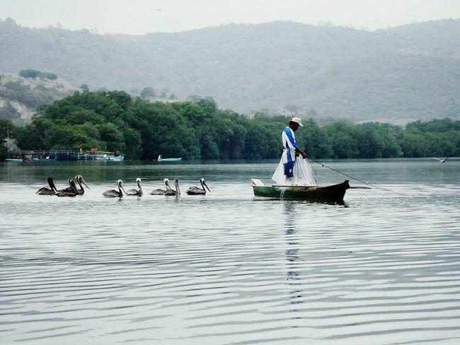 J.J.D.R Ecuador♥ Manabi Ecuador Pelicanos Aves Pescadores