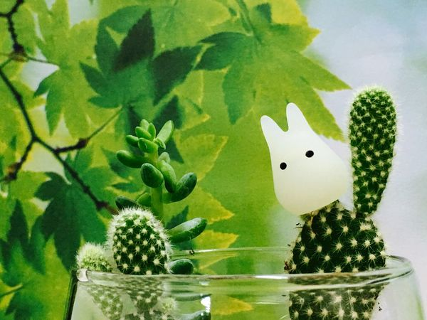 Leaf Animal Representation Art And Craft Creativity Green Color No People Plant Growth Close-up Nature Indoors  Water Freshness Day Green Plant Tiny Tree Freshness Green Color Cactus Terrarium🍀 New Life Serving Size Terrarium