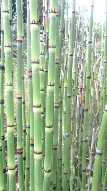 Zenkloster Backgrounds Bamboo Bamboo - Plant Bamboo Grove Beauty In Nature Close-up Day Green Color Growth Nature No People Outdoors Plant