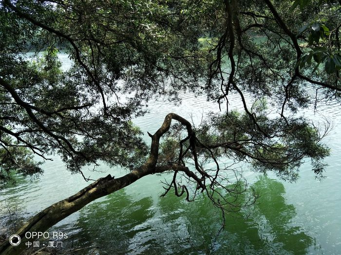 宁静的湖水,空气的清香,好不惬意