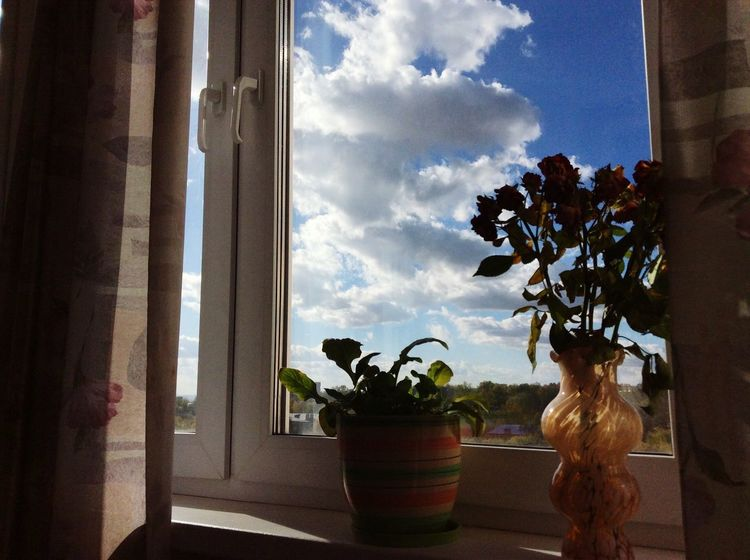 Window Flower Potted Plant Table Window Sill Plant Sky Day Houseplant Pot Plant Cloud - Sky No People Freshness