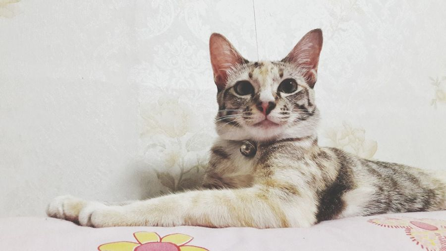 Cat looking away while relaxing on bed at home