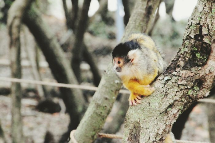 One Animal Animal Animal Themes Animals In The Wild Animal Wildlife Tree Nature Close-up Day Outdoors No People Monky EyeEm Best Shots Nature Travel Yellow Animals In The Wild